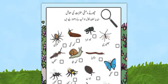 Minibeast Search Sheet Urdu - urdu, Minibeast hunt, minibeast investigation, finding minibeasts, Minibeasts, Topic, Foundation stage, knowledge and understanding of the world, investigation, living things, snail, bee, ladybird, butterfly, spider
