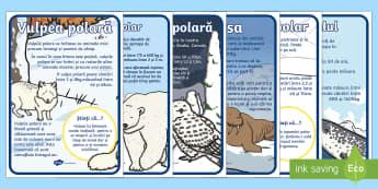 Animale polare - Planșe informative - regiuni polare, animale polare, polar, poli, viața la poli, polul sud, polul nord, planșe, materia