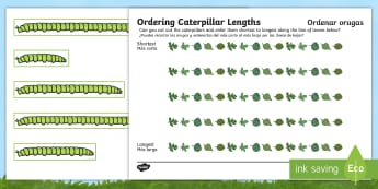 Ordering Caterpillar Lengths Activity Sheet English/Spanish - worksheet, order, lenth, catapillar, catterpillar, lenght, caterpiller, seriation, EAL, Spanish,