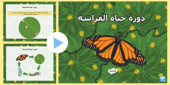 بوربوينت عرض دورة حياة الفراشة  - الفراشة، فراشات، دورة حياة الفراشة، الحيوانات، علوم،