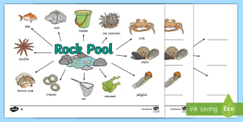 Rock Pool Word Map - seaside, beach, holidays, summer, sea