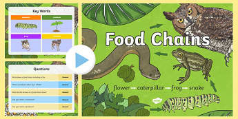 Food Chain PowerPoint - food chains, animal food chains, food chain games, food chain information, plant and animal food chains, all about food chains, ks2