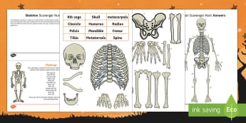 Skeleton Scavenger Hunt Activity Pack