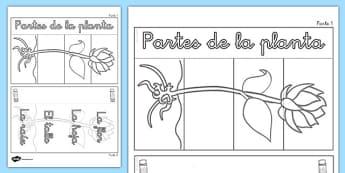 Ayuda visual interactiva Partes de una flor plegable - plants, parts, interactive, visual aid, activity, plantas