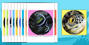 Under the Sea Themed Display Photo Cut Outs - cutouts, photos
