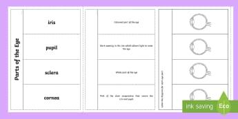 Parts of the Eye Flapbook-Scottish - CfE, eye, parts of the eye, sight, vision, sensory organs, biological systems SCN 2-12b,Scottish