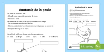 Fiche documentaire : L'anatomie de la poule - poule, anatomie, sciences, cycle 2, cycle 3, hen, chicken, Pâques, Easter, KS1, KS2, oiseau,French