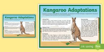 Kangaroo Adaptations Display Poster - biology, Australian curriculum biological science, joey, Australian desert, Australian animals, adap
