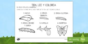 Ficha de tirar el dado y colorear para ayudar en la enseñanza de: La pequeña oruga glotona - dado, tira el dado, oruga, transformación, metamorfosis, mariposa, pintar, colorear, ciclo vital,Sp