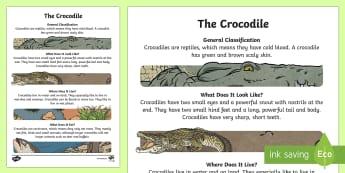 The Crocodile Information Report Writing Sample - Literacy, australian curriculum,,The Crocodile Information Report  Writing Sample, language, writing