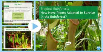 Rainforest Plant Adaptations PowerPoint