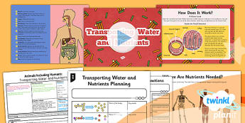 Science: Animals Including Humans: Transporting Water and Nutrients Year 6 Lesson Pack 3