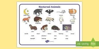 Nocturnal Animals Word Mat - animals, nocturnal, night, word mat, writing aid, mat, mole, owl, badger, bat, toad, mouse, hedgehog, fox, rabbit, cat, hamster, shadow, reflection, reflective