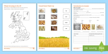 Introduction to Cereals Activity Sheets - wheat, cereals, staple foods, farming, worksheets