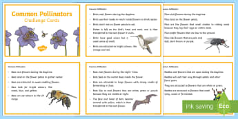 Common Pollinators Fact Cards - pollination, pollinators, bees, flower pollination, plant pollination, pollen, pollinating, animals