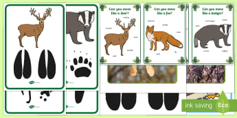 Tracks on the Forest Floor Movement Activity Resource Pack - Woodland, forest, animals, british wildlife, movement, PD, footprints, tracks