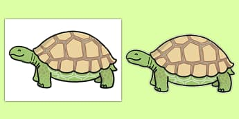Editable Tortoise Themed A4 Cut Outs - editable, tortoise, cut outs, a4, activity, display