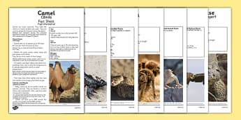 Desert Animals Fact Sheets Romanian Translation - romanian, desert animals, desert, animals, fact sheets, fact, sheets