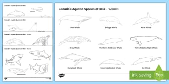 Canada's Aquatic Species at Risk Colouring Pages - Earth Day, science, environment, Junior Grades, Grade 4, Grade 5, Grade 6.