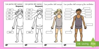 Ficha de actividad: Las partes del cuerpo y los sentidos - ficha de actividad, ficha, cuerpo, partes del cuerpo, mi cuerpo, cuerpos, miembros, brazo, brazos, p