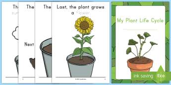 My Plant Life Cycle Activity Booklet - Early Childhood Plants, Pre-K Plants, Plants, Pre-Kindergarten Plants, K4 Plants, 4K Plants, life cy
