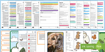 Owlets Adult Input Planning and Resource Pack - EYFS Owlets, Owl Babies, Martin Waddell, owl, nature, british, wildlife, nocturnal, night, animals,