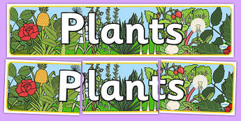 Plants Display Banner - plants, plant, display banner, banner