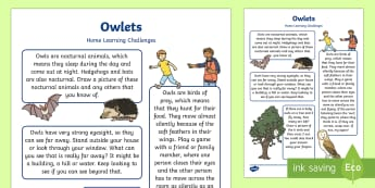 Owlets Home Learning Challenges Nursery FS1 - EYFS Owlets, Owl Babies, Martin Waddell, home learning, home work, parents links, home links, activi
