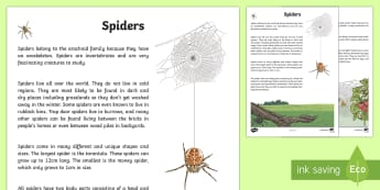 Spiders Information Report Writing Sample - Literacy, Spiders Information Report  Writing Sample, information report, writing, writing sample, i