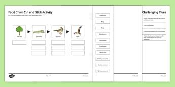 Woodland Food Web Cut and Stick Activity Sheet, worksheet, plenary activity