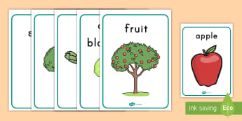 Apple Tree Life Cycle Growth Display Posters - science, growth cycle, apples, posters, seed