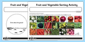 Fruit and Vegetable Sorting Activity Sheet - fruit, vegetable, worksheet