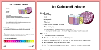 Red Cabbage Indicator Adult Guidance Sheet - red cabbage, indicator, ph balance, ph, adult guidance, sheet