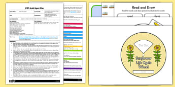 Life Cycle of a Sunflower Read and Draw Activity EYFS Adult Input Plan and Resource Pack - EYFS, Early Years planning, adult led, Literacy, plants and growth