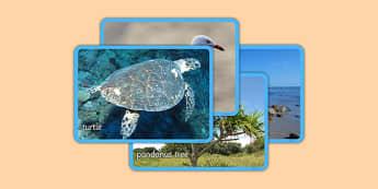 Australian Beach Habitat Photo Display Pack - australia, Science, Year 1, Habitats, Australian Curriculum, Beach, Living, Living Adventure, Good to Grow, Ready Set Grow, Life on Earth, Environment, Living Things, Animals, Plants, Photos, Photographs,
