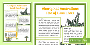 Aboriginal Australians Use of Gum Trees Display Poster - ACSSU031, ACSSU018, ACSSU074, ACSHE051, eucalypt, eucalyptus, gumtree, indigenous Australians, abori