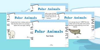 Amazing Polar Animals Display Fact Cards - polar, facts