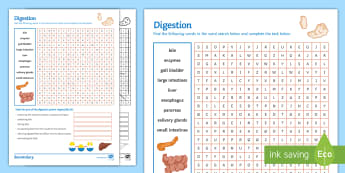 Digestion Word Search - bile, pancreas, enzymes, gall bladder, intestines