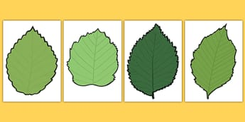 Blank Leaf Templates - blank, leaf, templates, autumn, display