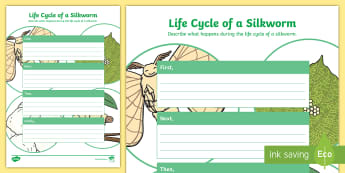 F-2 Silkworm Life Cycle Writing Frame Activity Sheet - silkworms, Australia, life cycle, mulberry, mini beasts, writing, worksheet