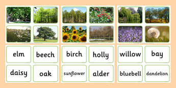 Nature Tree Photo Matching Cards - nature, tree, photo matching cards, matching, cards, match, photo