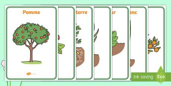 Affiches : les fruits et légumes - printemps, plantes, fleurs, végétaux, le vivant, cycle de vie, fruits, légumes, cycle 2, cycle 1,