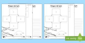 Platypus Life Cycle Activity Sheet - ACSSU030, ACSSU072, life stages, growth, puggle, monotreme, worksheet