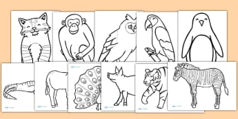 Animal Colouring Sheets - colouring, sheets, fine motor skills, animals, colouring animals, coloring animals, animals colouring activity, wet play, poster, worksheet, display, fun, activity, art, craft