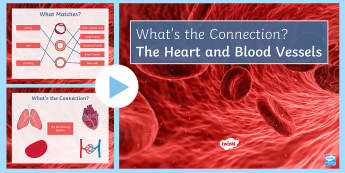 The Heart What's the Connection? PowerPoint - KS4 What's the Connection?, Heart, Blood Vessels, Veins, Capillaries, Arteries, Lungs, Circulatory