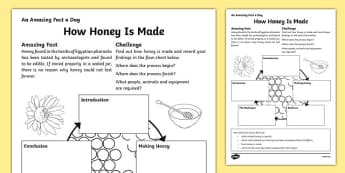 How Honey Is Made Activity Sheet, worksheet