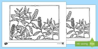 Melaleuca Mindfulness Colouring Page - Australian Mindfulness Colouring, ,Australia
