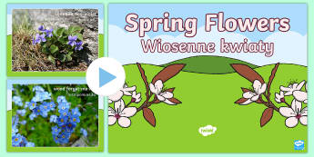 Spring Flowers PowerPoint English/Polish - Spring, british flowers, woodlands, woods, flowers, seasons,Polish-translation