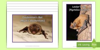 Irish Bats Display Photos - science, bats, mammals, display photos, ireland, species native to Ireland,Irish