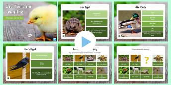 Spring Animals PowerPoint - Spring, animals, wildlife, german